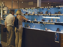 Choosing fish from a retailers tanks