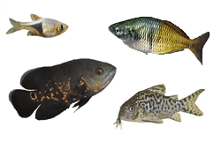 Four different fish