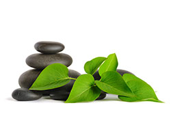 Zen like pebbles and plant