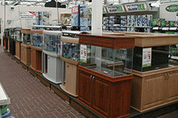 Selection of fish tanks and aquariums in a shop