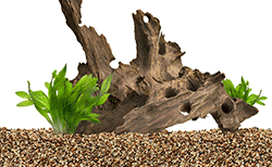 Natural aquarium decoration wood