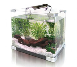Maintaining Small Aquariums Feeding Purchase And