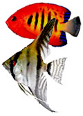 marine and freshwater tropical fish