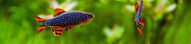 Tropical Fish Keeping Practical Care Information From