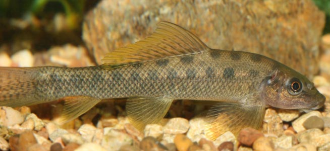 Can Goldfish Eat Marine Fish Food